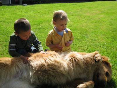 HB 2 boys dog