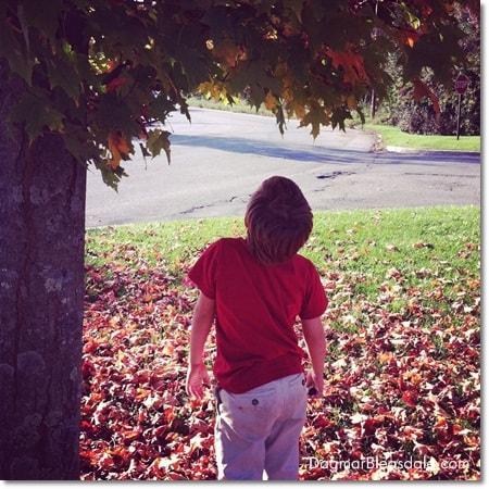 fall foliage, autumn leaves