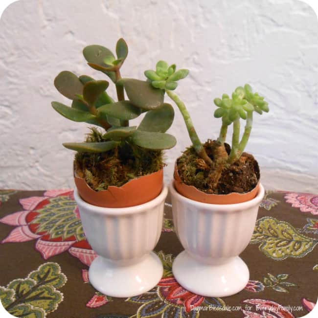 succulents in egg holder