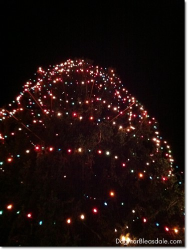 Katonah Christmas tree, biggest in New York State