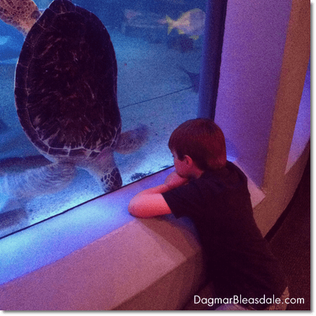 boy looking at sea turtle at Mystic Aquarium