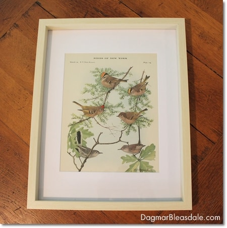 framed vintage bird print