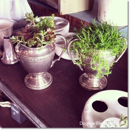 vintage silver sups with succulents
