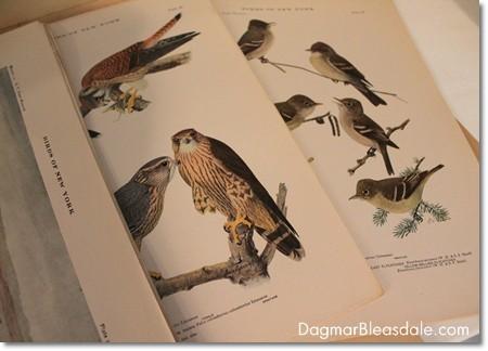 vintage bird prints, 1915