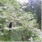 bumble bee on window