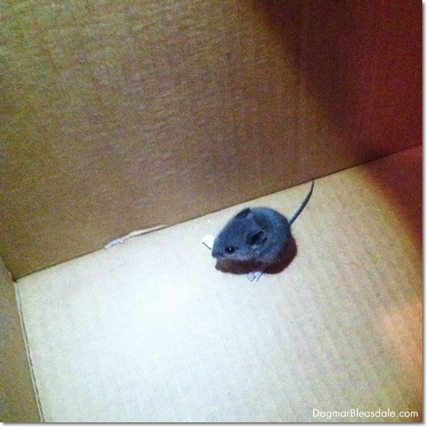 mouse in box
