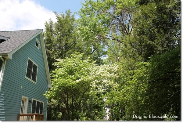 Blue Cottage Backyard, DagmarBleasdale.com