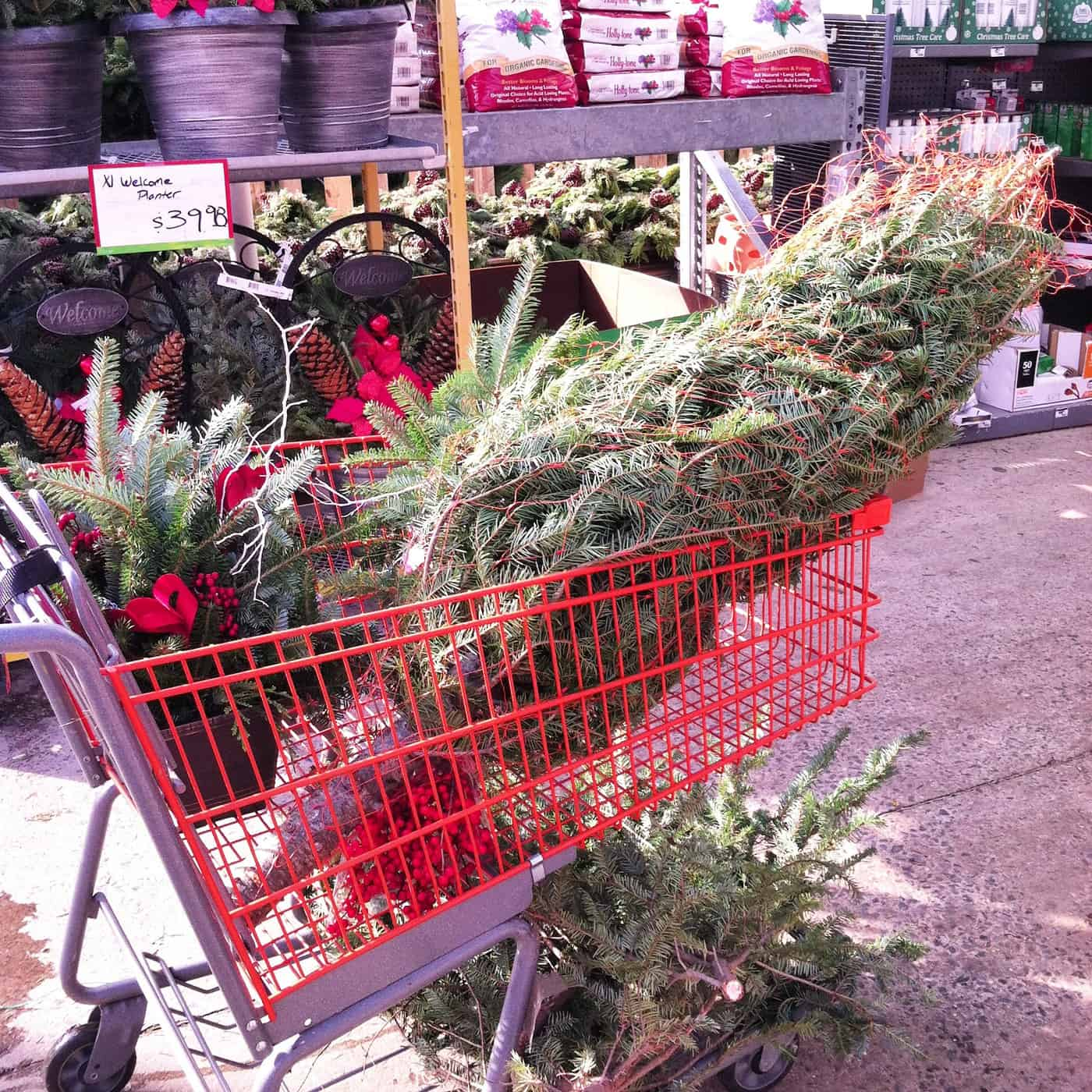How to Make a Christmas Tree Look Fuller and Taller – on a Budget